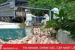Ông chủ trang trại sắm 'lệnh bài' cho lợn xuất chuồng