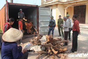 Hà Nội: Lại chuẩn bị đấu giá gỗ sưa đỏ thôn Phụ Chính