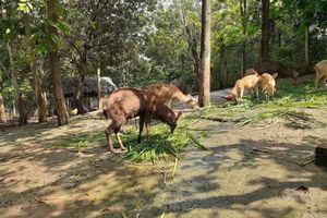 Tăng cường quản lý nuôi, nhốt động vật hoang dã