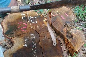 Vụ rừng đặc dụng Pù Mát bị xẻ thịt: Đủ điều kiện xử lý hình sự