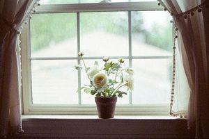 Đặt cửa sổ theo hướng này: Hút nguồn năng lượng tốt, tiền tài kéo vào nhà cuối năm tiêu không hết