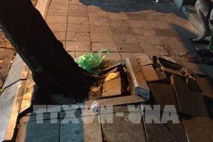Hà Nội: Chặt hạ cây sưa tại phố Thuốc Bắc theo tình huống khẩn cấp