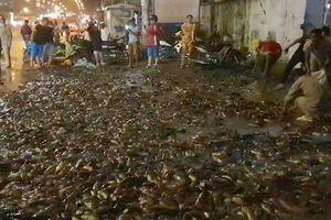 Hơn 100 người giúp tài xế gom 2,7 tấn cá bị đổ tràn trên quốc lộ