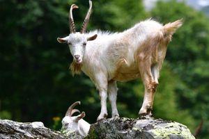 Chiêm ngưỡng thiên nhiên kỳ vĩ trong Vườn quốc gia Rista ở Abkhazia