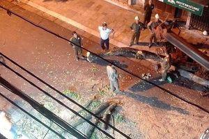 Lý do cây sưa đỏ trên phố cổ Hà Nội bị chặt khẩn cấp giữa đêm