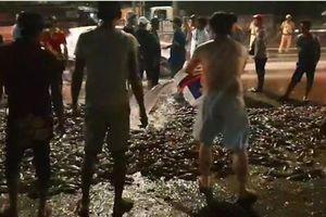 Xe tải lật giữa Quốc lộ 1A, dân xúm vào thu gom hàng tấn cá rô giúp tài xế