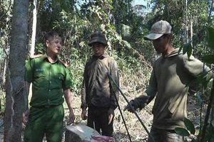 Khai thác hàng chục mét khối gỗ, bốn người bị bắt