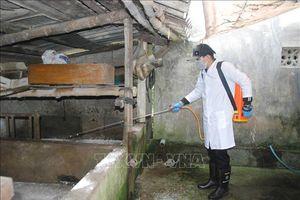 Dịch tả lợn châu Phi lan ra những hộ chăn nuôi quy mô lớn ở Quảng Trị