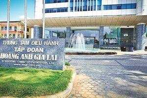 Thêm một công ty con được HAGL Agrico 'bán đứt' cho Thaco