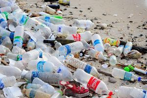 Phân loại rác tại nguồn và mức phạt cho hành vi xả rác không đúng nơi quy định