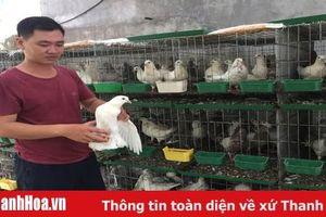 Mô hình nuôi chim bồ câu Pháp thu lãi gần 50 triệu đồng/tháng ở Vĩnh Lộc