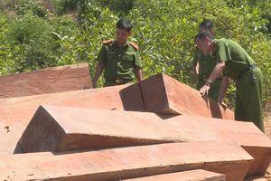 Công an theo dõi 5 tháng bắt quả tang nhóm người đốn 160 m3 gỗ lậu