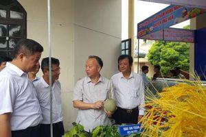 Ứng Hòa cần đẩy mạnh sản xuất nông nghiệp ứng dụng cao
