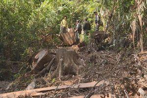 Bắt quả tang nhóm đối tượng phá rừng quy mô lớn