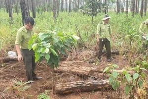 Lâm Đồng thu hồi toàn bộ đất rừng giao cho cộng đồng