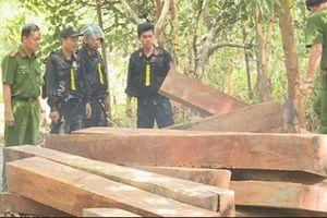 Đắk Lắk: Trưởng thôn tham gia phá rừng bị bắt tạm giam