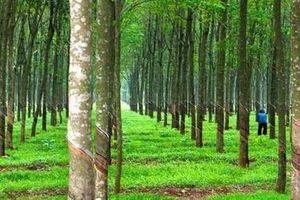 Nông nghiệp Hoàng Anh Gia Lai tiếp tục chuyển nhượng một công ty con cho Thadi