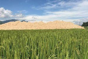 Quảng Ngãi: Kiểm tra xử lý dự án lấp lúa làm khu dân cư