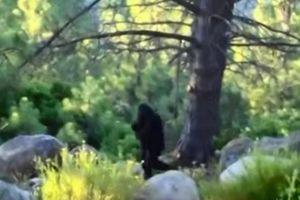 Những lần quái vật chân to Bigfoot xuất hiện gây xôn xao