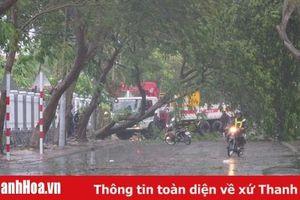 Thanh Hóa: Chiều tối có mưa, đề phòng gió lốc và sét