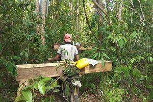Tận thấy cảnh tàn sát rừng ở Krông Pa