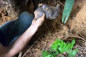 Kon Tum: Đi đào bắt dúi, nam thanh niên bị đất vùi lấp tử vong