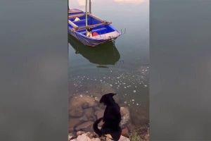 Video chú chó dũng cảm cứu bạn mắc kẹt trên thuyền