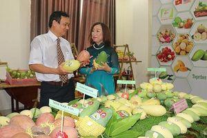 Quan hệ hợp tác Việt Nam – Australia: Thực chất, hiệu quả