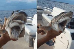 Hãi hùng câu được 'cá thần' quái dị có 2 miệng