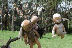 Hòn đảo treo hàng nghìn con búp bê trên thân cây qua lời kể ly kỳ của du khách