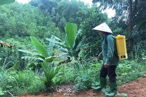 Yên Bái: Siết chặt quản lý thuốc bảo vệ thực vật