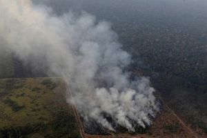 Tổng thống Brazil huy động quân đội dập tắt cháy rừng Amazon