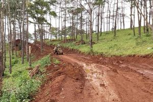 Đắk Nông: Người dân ngang nhiên mở đường trong rừng