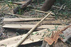 Vụ tàn sát rừng ở Krông Pa: Ai chịu trách nhiệm?