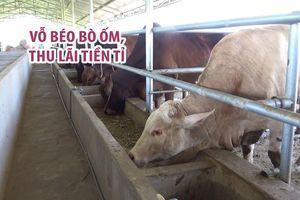 Mua bò ốm về vỗ béo, 4 tháng sau bán giá gấp đôi, thu lãi tiền tỉ