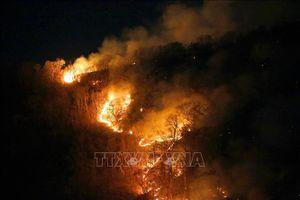 Số vụ cháy rừng ở Trung Phi nhiều hơn ở Brazil trong vòng 48 giờ qua