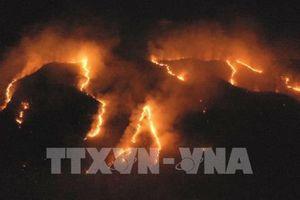 Rừng Amazon đang bị tàn phá nặng nề bởi những trận cháy lớn