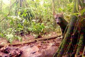 Điểm loạt sinh vật bí ẩn, quý hiếm của rừng Amazon
