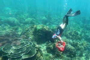 Gần 10 năm nhặt rác dưới đáy biển: Người đàn ông biến tình yêu Sơn Trà thành hành động