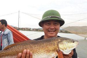 Quảng Bình: Ngư dân bắt được cặp cá nghi sủ vàng nặng 7kg trên sông Loan