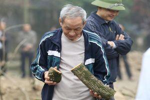 Mời đấu giá 2 cây sưa quý ở đình Phụ Chính, giá khởi điểm gần 150 tỉ