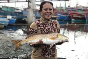 Cặp cá nghi sủ vàng nặng 7kg sa lưới trên sông Loan
