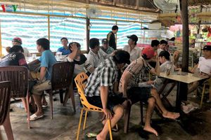 Cà Mau: Triệt phá tụ điểm đá gà ăn tiền qua mạng
