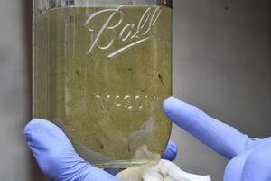 Vi nhựa trong nước uống có gây nguy cơ cho sức khỏe không?