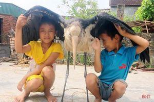 Nông dân Hà Tĩnh bắt được chim lạ khổng lồ có sải cánh dài 2m