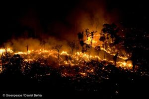 Lo ngại trước việc cháy rừng Amazon lên mức kỷ lục