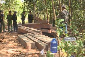 Phát hiện thêm nhiều điểm tập kết, khai thác gỗ lậu quy mô lớn