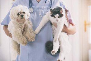 Bác sĩ thú y trẻ Ninh Bình - Thần may mắn của 'Ngáo Husky'