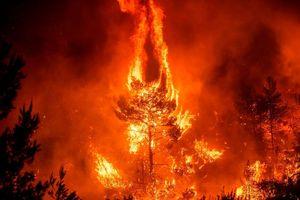 Xác định thủ phạm gây ra hàng loạt vụ cháy tại rừng Amazon?