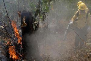 Tin tức thế giới 26/8: G7 sắp thống nhất biện pháp dập cháy rừng Amazon